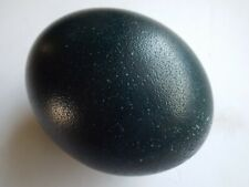 DARK GREEN SPECKLED EMU EGG (EMPTIED, CLEANED, NO HOLES!)
