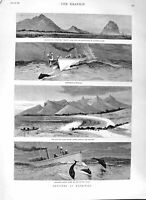 Original Old Antique Print 1882 Mauritius Porpoise Tamarind Morne Rock Slaves