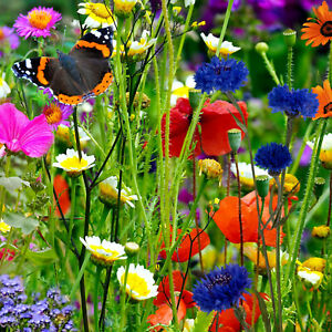 100% Wild Flower Seeds 10g NO GRASS Scented Bee Butterfly Meadow Cottage Garden