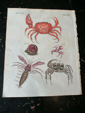 Crabs, Bilderbuch für Kinder Bertuch, ca: 1800