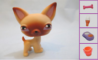Littlest Pet Shop Dog Puppy Chihuahua Tan Brown 1 and Free Accessory