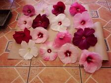 Hibiscus moscheutos mix,10 seeds