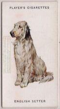English Setter Dog Canine Pet 1920s Ad Trade Card