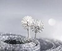 925 Sterlingsilber Damen Ohrstecker Ohrringe Pusteblume Blume Dandelion Silber