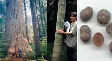 Bis über 100 M. hoch: schnell wachsende Riesen-Bäume-Sortiment 3 Sorten Gehölze