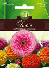 5723290 Zinnie dahlienblütige Mischung 'Zinnia elegans'  Blumen Samen Zinnien