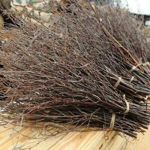 A Bundle Natural Birch Twigs Birch Branches Centerpieces Party Decorative*1 S6B1