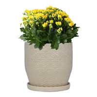 "Planter Pot w/ Saucer Plant Flower Indoor Outdoor Garden Ceramic [10"" or 12""]"