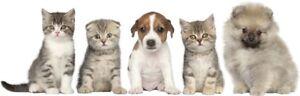 CATS & DOGS WALL STICKERS cat dog Puppy Kitten Vinyl Decal Mural Art Sticker