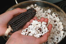 """Black Diamond Popcorn"" Super Flavor corn Heirloom 40+ seeds  Organic NON-GMO"