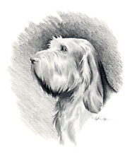 Spinone Italiano Art Print Pencil Drawing 8 x 10 by Artist Djr w/Coa