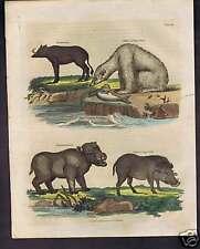 Polar Bear-Hippoptamus-Otter-Seal- Natural History 1817