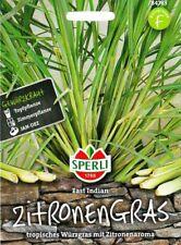 Zitronengras 'East Indian' - Cymbopogon flexuosus, Topfkultur ca. 50 Samen 84783