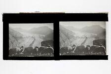 Moutons au dessus du Glacier d'Aletsch Suisse Stereo L14 Plaque de verre Vintage