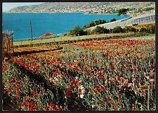 AD0269 Imperia - Provincia - Sanremo - Panorama - Campo di fiori