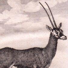Gravure XVIIIe Gazelle Pasan Antilope Oryx Gazella Antilope Bovidés  Buffon 1790
