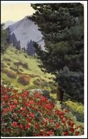 Photochromie AK ~1920 Botanik Pflanze Rhododendron, alte Postkarte