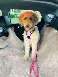 Petego Animal Basics Dog Seat Cover Back Seat Hammock For Cars Trucks SUV's
