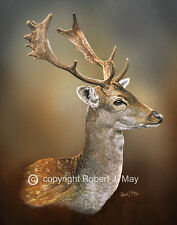 Fallow Deer Limited Edition Print by Robert J. May