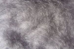 2x1g Poil MOHAIR dubbing GRIS BLEU montage  mosca fly tying grey blue