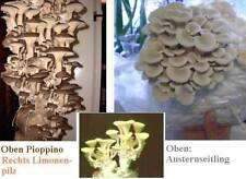 Pilze Sortiment für das Zimmer kletternde Pflanzen schnellwüchsig Gemüse robust