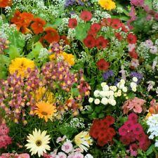 Blumen Mischung Balkon Pflanze einjährig 100 Samen Nr.305