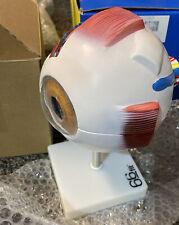 66fit Human Giant Eye Model - White - Medical Training  Teaching Aid