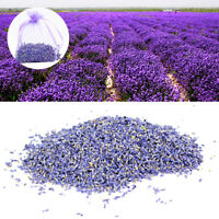 100g Natural Dry Blue Lavender Flower Buds Blooms Floral Sachet Making Supply