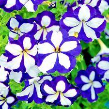 Seeds flower Petunia x hybrida Blue Star F1 Blue from Ukraine