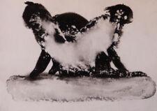 Dessins et lavis du XXe siècle et contemporains animaux, pour surréalisme