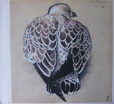 Beau Tunnicliffe Oiseau Imprimé~ Jeune Hareng Mouette