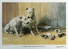 "BULL TERRIER ENGLISH DOG FINE ART LIMITED EDITION PRINT - ""A Matter of Colour"""