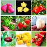 100 Pcs Seeds Chili Hot Pepper Ubatuba Cambuci Capsicum Baccatum Vegetables NEW