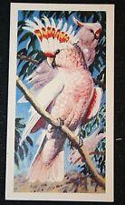 PINK COCKATOO  Original Vintage Colour Card # VGC