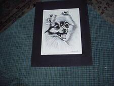 Vintage Hand Drawn Pen & Ink POMERANIAN DOG Drawing Signed: H.Blumenfeld