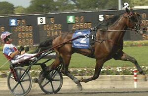 DONATO HANOVER 8X10 PHOTO HARNESS HORSE RACING PICTURE WIDE BORDER