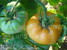 PERSIMMON ORANGE Tomate *** Fleisch-Tomaten ** 10 Samen