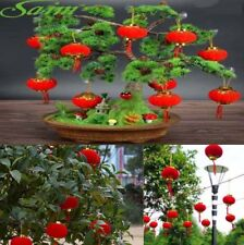 30 Pcs Red Small Lantern Decor for New Year Spring Festival Wedding Ornament