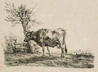 VERBOECKHOVEN; ROMMEL, Tierporträt einer weidenden Kuh, 19. Jh., Lithographie
