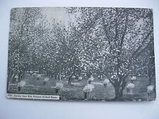 1910 FIGHTING FROST WITH TROUTMAN ORCHARD HEATER CANON CITY, COLORADO POSTCARD