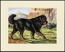 TIBETAN MASTIFF MOUNTED DOG PRINT READY TO FRAME