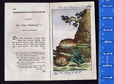 The Small Dormouse - Haselmaus - 1785 Buffon Hand Colored Copper Plate Engraving