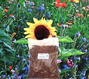 Blühmischung Gründüngung Frische Saat 500 g für ca. 200 m²