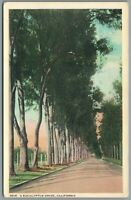 Postcard El Segundo CA Eucalyptus Drive tall trees along an empty road unposted