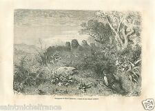 Chasseur Hunter Hunting Lions Afrique Africa GRAVURE ANTIQUE OLD PRINT 1860