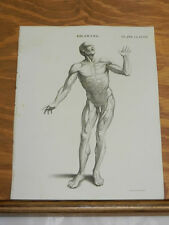 1817 Antique Print/DRAWING FRONTAL VIEW OF MALE HUMAN