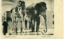 1910s Elephant S-Petersburg Zoological Museum Taxidermy Russian Antique postcard