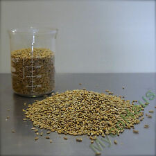 25 pounds rye berries whole grain grass seed bread baking flour beer making crop