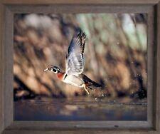 Wild Wood Duck Flying Bird Hunting Animal Wildlife Barnwood Wall Decor Picture