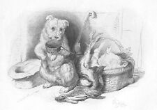 HUNGRY SAD FACE SCOTTISH TERRIER DOG HOLDS FOOD BOWL ~ 1876 Art Print Etching